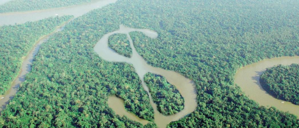 rainforestcut